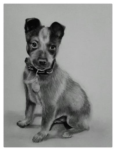 A painting of dog, dog like mammal, dog breed, street dog, australian cattle dog, snout, carnivoran, australian stumpy tail cattle dog, vulnerable native breeds, rare breed dog