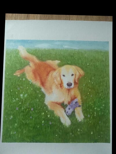 A painting of dog, dog breed, dog like mammal, golden retriever, dog breed group, retriever, dog crossbreeds, snout, carnivoran, sporting group