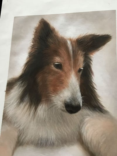 A painting of dog, dog like mammal, dog breed, mammal, rough collie, scotch collie, shetland sheepdog, dog breed group, collie, fur