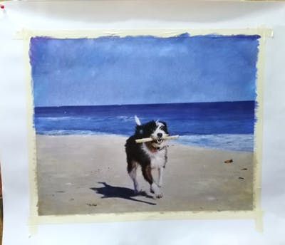 A painting of dog, body of water, beach, sea, dog like mammal, water, sky, vacation, sand, shore