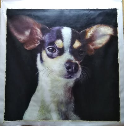 A painting of dog, dog breed, dog like mammal, chihuahua, puppy, snout, whiskers, dog breed group, ear, carnivoran