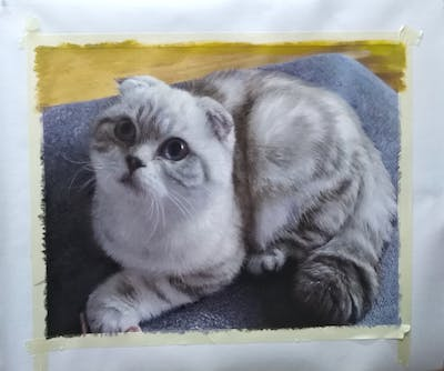 A painting of cat, small to medium sized cats, cat like mammal, whiskers, fur, snout, scottish fold, domestic short haired cat, asian, carnivoran