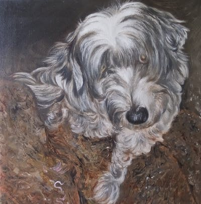 A painting of dog like mammal, dog breed, dog, dog breed group, schnoodle, tibetan terrier, snout, havanese, bearded collie, löwchen