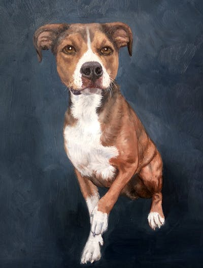 A painting of dog, dog breed, dog like mammal, american staffordshire terrier, carnivoran, grass, plummer terrier, dog breed group, american pit bull terrier, dog crossbreeds