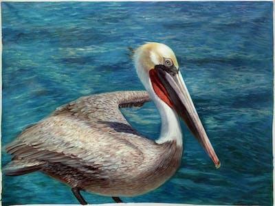 A painting of pelican, bird, seabird, beak, fauna, water, sea, pelecaniformes, wildlife, water bird