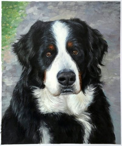 A painting of dog, bernese mountain dog, dog breed, dog like mammal, dog breed group, greater swiss mountain dog, snout, companion dog, appenzeller sennenhund, entlebucher mountain dog