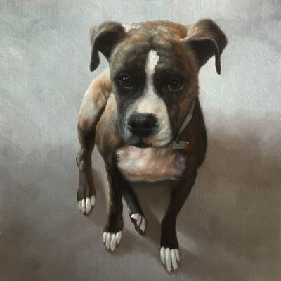 A painting of dog, dog breed, dog like mammal, dog breed group, boxer, olde english bulldogge, snout, carnivoran, valley bulldog, american pit bull terrier