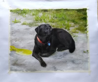 A painting of dog, dog breed, labrador retriever, dog like mammal, borador, dog breed group, retriever, sporting group, snout, flat coated retriever