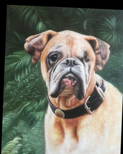 A painting of dog, dog like mammal, dog breed, bullmastiff, nose, snout, old english bulldog, olde english bulldogge, carnivoran, toy bulldog