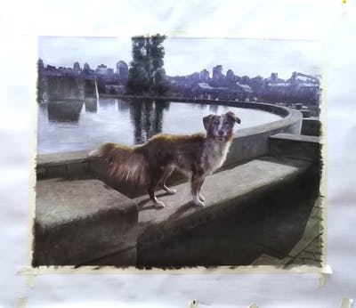 A painting of dog, dog like mammal, water, dog breed group, water feature
