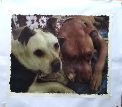 A painting of dog breed, dog, snout, dog crossbreeds, dog breed group, dog like mammal, pit bull, american pit bull terrier