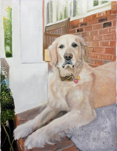 A painting of dog, golden retriever, dog breed, dog like mammal, retriever, dog breed group, snout, sporting group, companion dog, dog crossbreeds