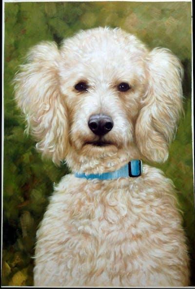 A painting of dog like mammal, dog, dog breed, miniature poodle, standard poodle, vertebrate, poodle, goldendoodle, poodle crossbreed, toy poodle